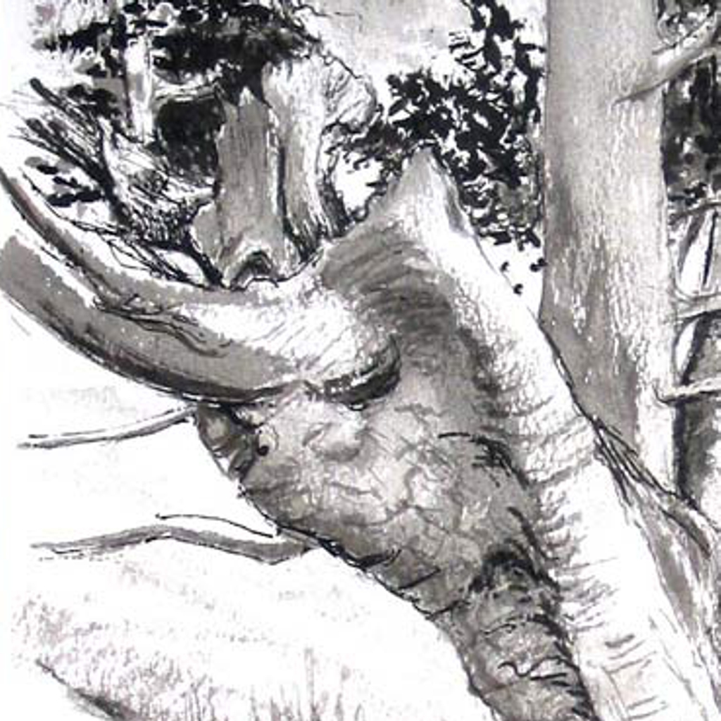 Angela Godfrey tree trunk drawing detail